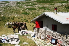 Rifornimento rifugio con muli