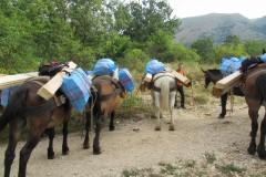 Rifornimento  Rifugio Sevice con i muli